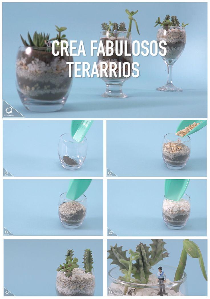 Terrario con cactus | CC DIY