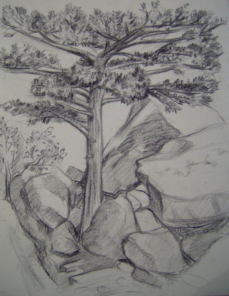 een ( hele mooie )Schets van een boom. schetsen. Een schets is een niet uitgewerkte tekening, meestal bedoeld om iets op een wat makkelijkere of simpelere manier duidelijk te maken. Het is een vorm van studie.
