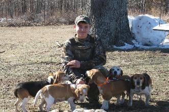 Bear Cubs Beagles, beagles for sale