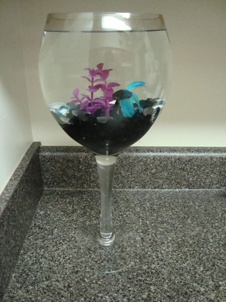 1000 images about betta fish bowls tanks ideas on for Betta fish bowl ideas