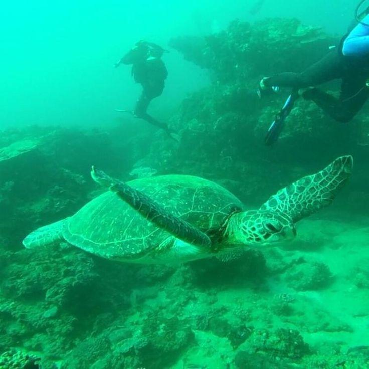 Turtle in Sodwana Bay, South Africa