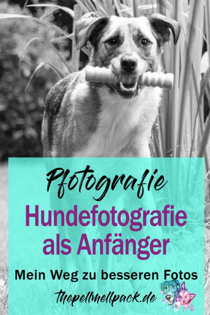 Pfotografie - Als Anfängerin in der Hundefotografie kann man manchmal verzweifeln. Meinen Weg und hilfreiche Tipps beschreibe ich dir hier   thepellmellpack.de