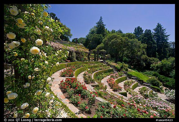 17 best images about favorite california places spaces Berkeley rose garden