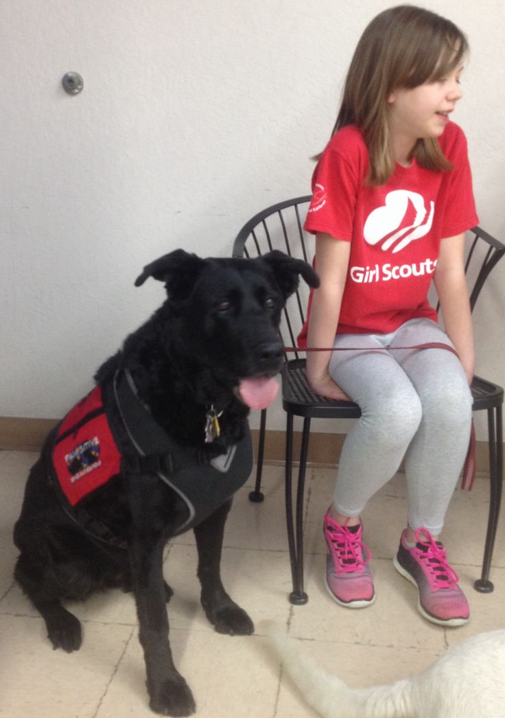 Autism Service Dogs You Tube