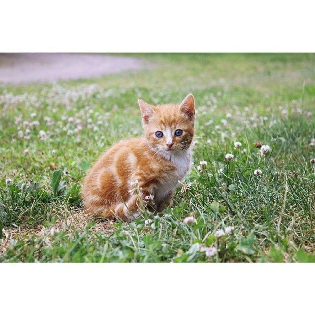 Jag har kattungar. Bara så ni vet liksom. Mjau. #Padgram