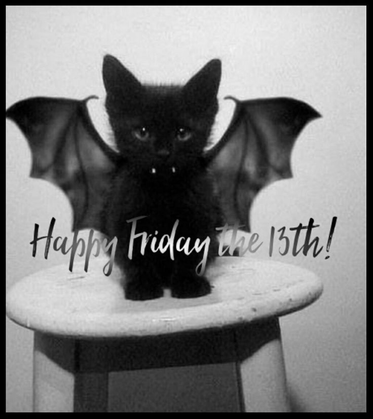 HAPPY FRIDAY THE 13TH!  #happyfriday #fridaymeme #fridays #the13th #happyfridaythe13th #friday #fridaythe13th #funnymemes #friday13th #meme #memes #memesdaily #blackcat #black #cat #wings #fangs