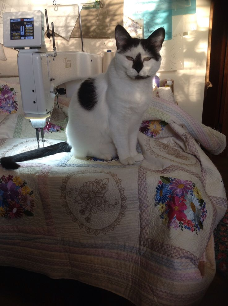 Oreo helping me quilt.