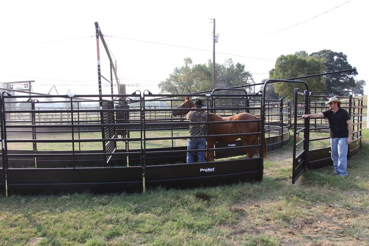 """Panel Walkers help to """"push"""" your horse instead of """"pull"""". Horses can figure out the routine in no time!"""