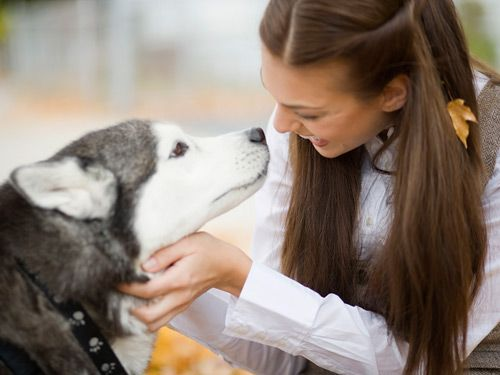8 Common Dog Fears and How to Ease Them #petsPets Parents, Dogs Adoption, Husky Girls, Anxiety In Dogs, How To Calm Your Dogs, Common Dogs, Dogs Info, Dogs Blog, Dogs Fear