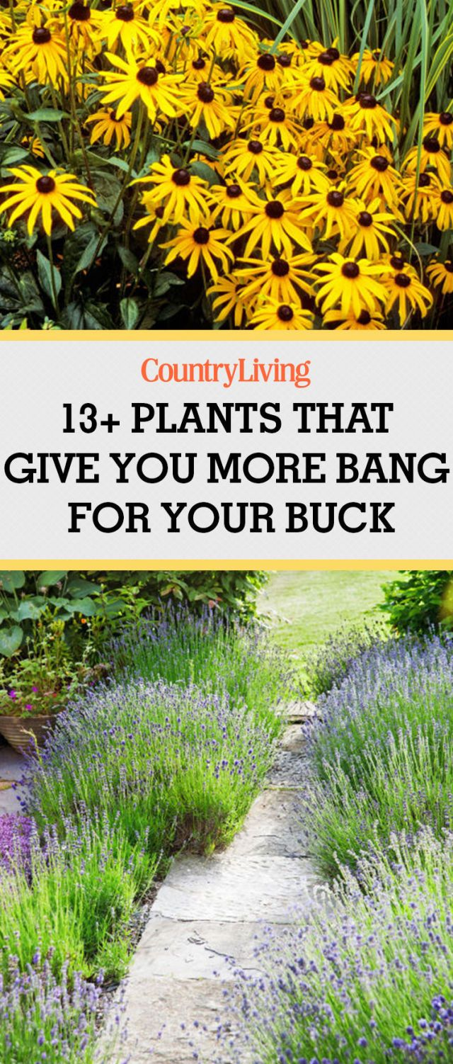 883 best images about garden paths on pinterest shade garden - 13 Plants That Give You More Bang For Your Buck