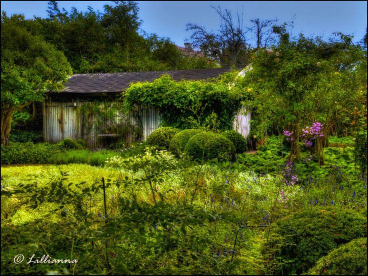 Trädgård, damm, trädgårdsdamm, rosor, trädgårdsresor, perenner, blommor, buskar, träd, latinska namn, fisk, samlarträdgård, Lillianna