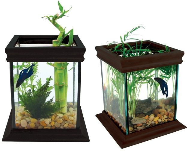 17 best images about betta fighter fish tank ideas on for Beta fish tanks