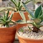 Plants that Clean the Air: Organic Gardening