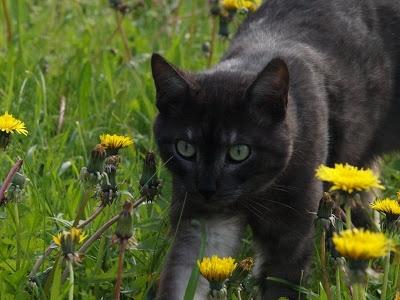 A veces pienso que mi gato Ceniza es el más juicioso de la familia. Se toma las cosas tal y como vienen, sin darle demasiada importancia a la vida.
