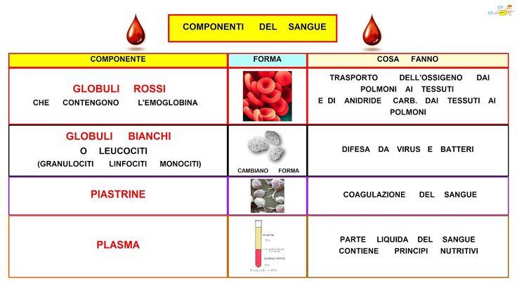 Mappa Concettuale: Componenti del sangue  #biologia #appunti #mappaconcettuale