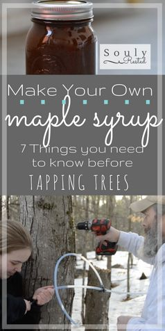 Homemade maple syrup | DIY maple syrup | how to tap trees for maple syrup | tapping trees | syrup supplies | what you need to know before you tap your trees | making syrup | making maple sugar | making maple cream | video tapping trees | running tubing for maple sap