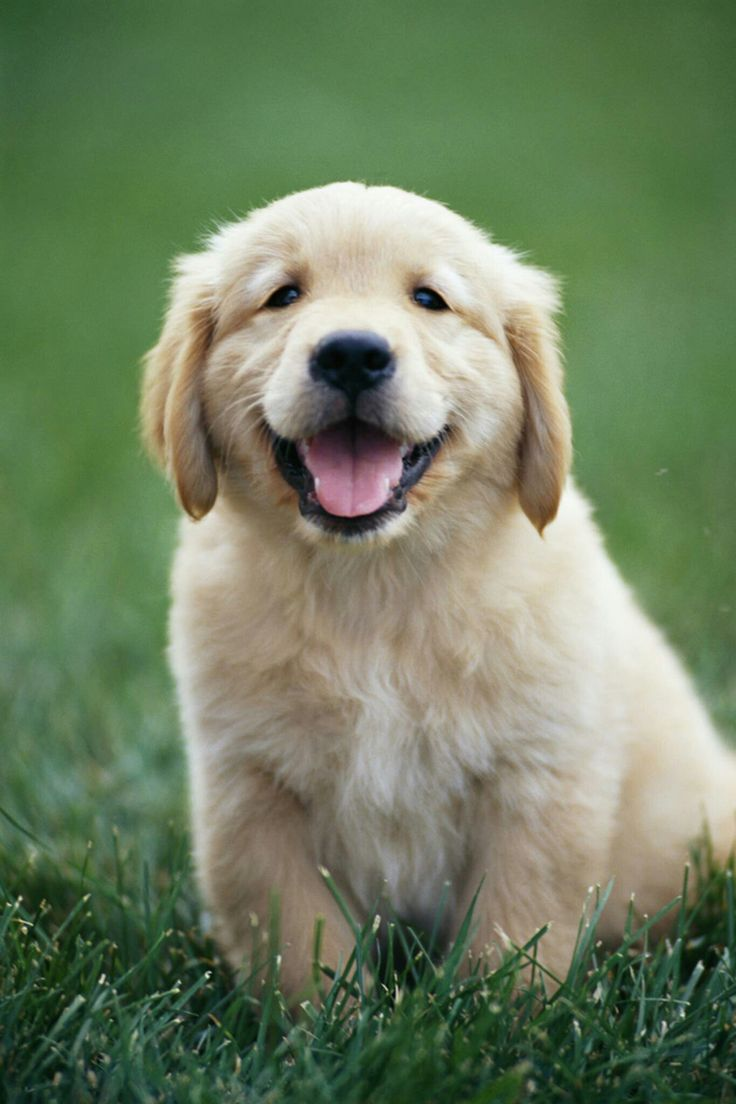 best animals and pets images on pinterest adorable animals