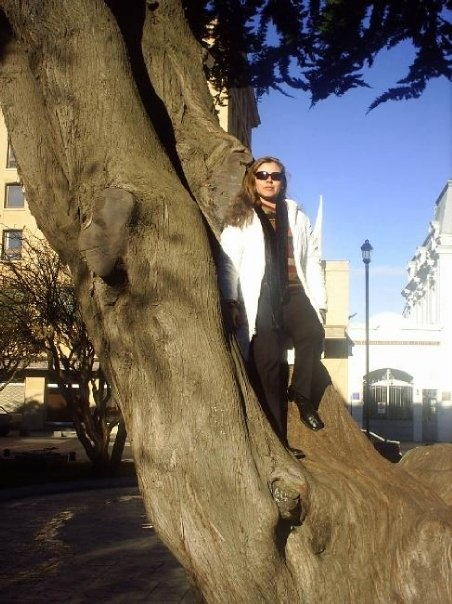 In Punta Arenas: The Tree more Big in the Plaza de Armas of the City.