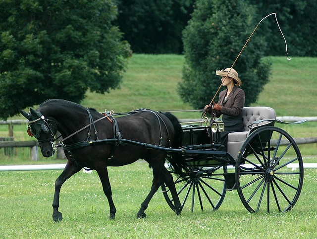 carriage driving...try a new hobby.
