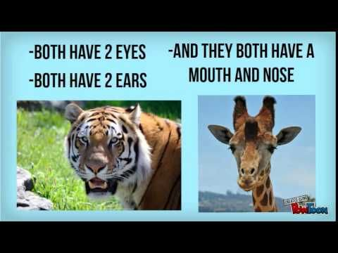 Animal Similarities And Differences Animals