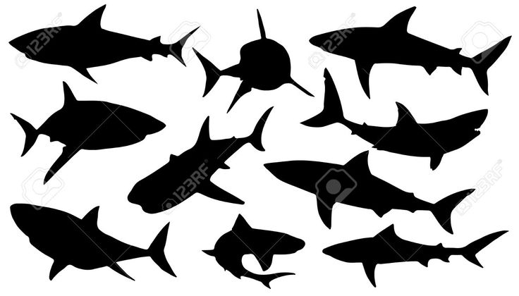 Shark Silhouettes Google Search Projects To Try