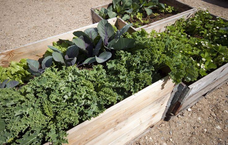 Bálint György kertről, növényekről | Egyenes derékkal – a magaságy mellett