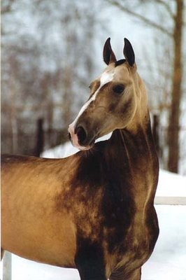 Equine horse pony equestrian caballo pferde equestrian stallion gelding mare foal