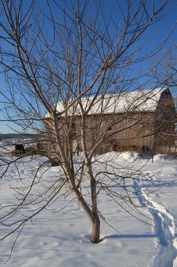 Farm in Bailieboro, Ontario, Canada. Outdoor, Places, Farm