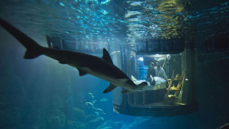 - Ganhadores de promoção do Aquário de Paris e empresa de serviço de hospedagem aproveitam o prêmio: dormir no quarto subaquático rodeado de tubarões instalado em um dos tanques. Foto: Michel Euler/AP