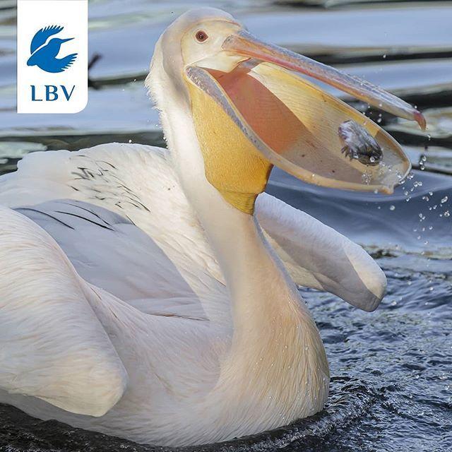Wir Brauchen Eure Hilfe Pelikan Gesucht Die Identitat Des