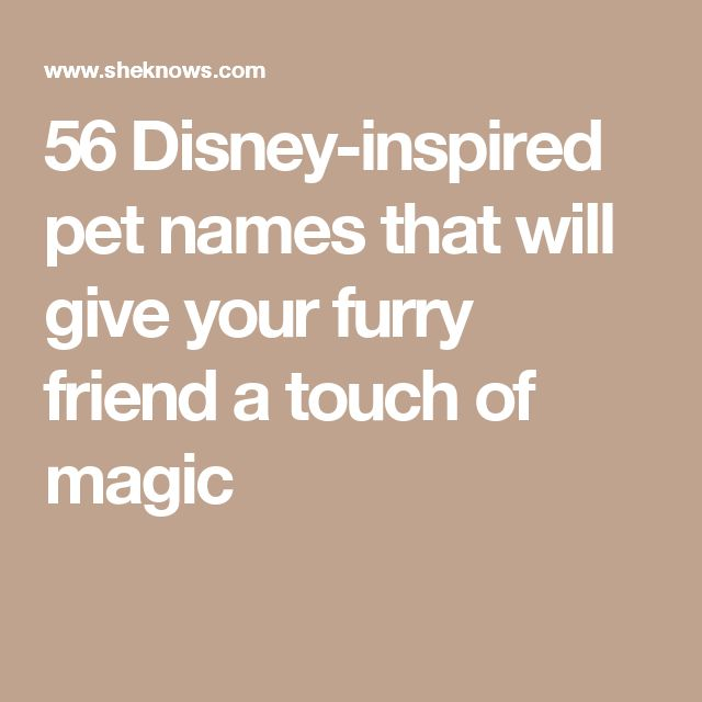 56 Disney-inspired pet names that will give your furry friend a touch of magic