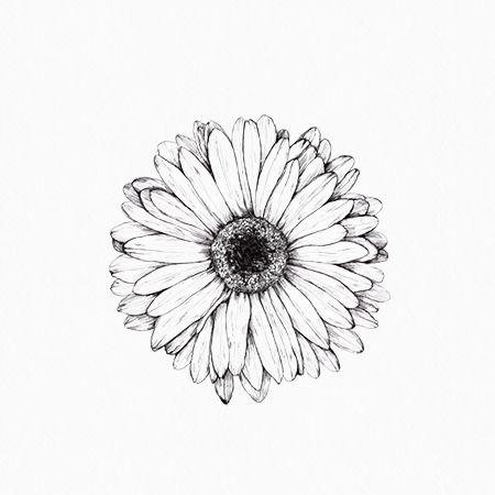 Gerbera Daisy Line Drawing Best 25+ Gerbera daisy...
