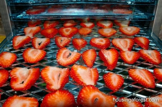 Thumb Como fazer deliciosa fruta seca em casa. Vai adorar!