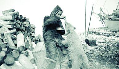 Amundsen trata de domesticar a un cachorro de oso polar. La MAUD está en el fondo.