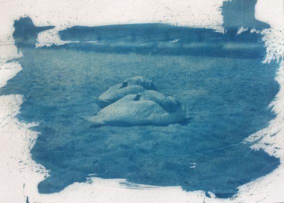 Cyanotype   A4   #schwan #swan #nature #animal #cyanotype #cyanotypie