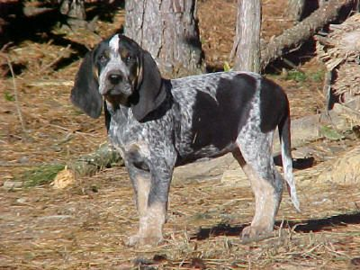 Coon Dog Kennels In Sc