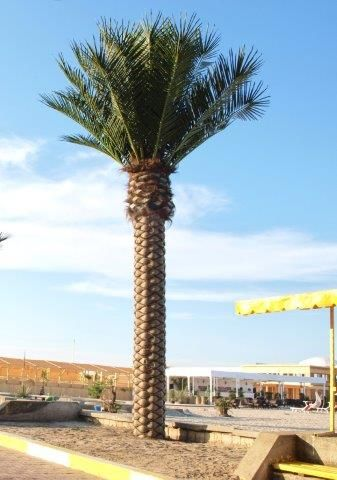quality artificial palm beach and terraces - delivery and installation RobertoRossi.ro
