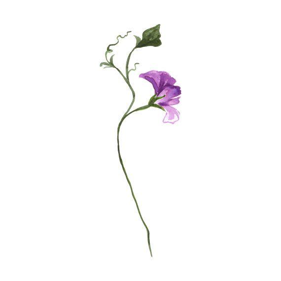 Watercolour Sweet Pea Tattoo - Flower Tattoo - Temporary Tattoo - Multiple Sizes