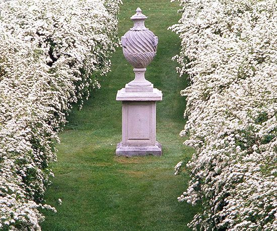 Bridalwreath spirea makes an elegant border and is widely adaptable, deer proof, drought tolerant, and easy to grow. An arching abundance of white flower clusters in mid-spring give the shrub a romantic air.