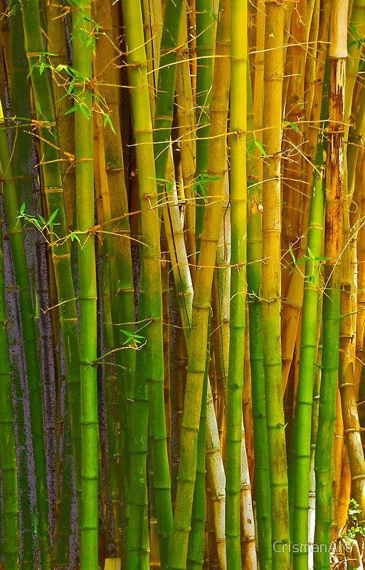 Singing Bamboo Vergelegen https://www.redbubble.com/people/crismanart/works/24740985-singing-bamboo-vergelegen?asc=u&p=iphone-case&ref=artist_shop_grid