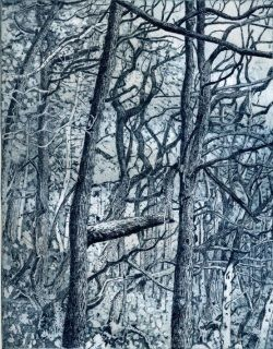 Tangled Wood by Janis Goodman
