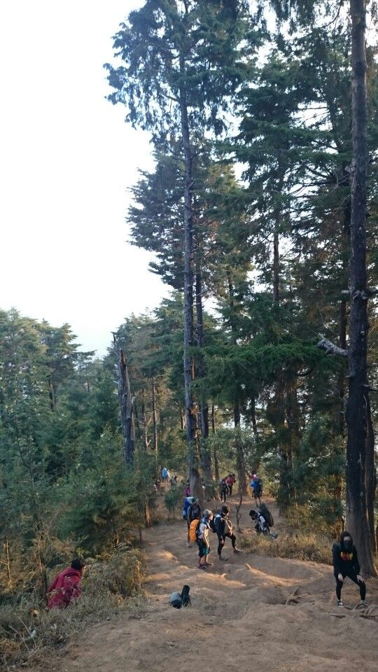 Hiking track to Prau Mountain