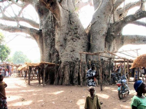 不思議な形の木11