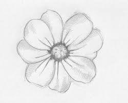 34 Best Flowers Images On Pinterest