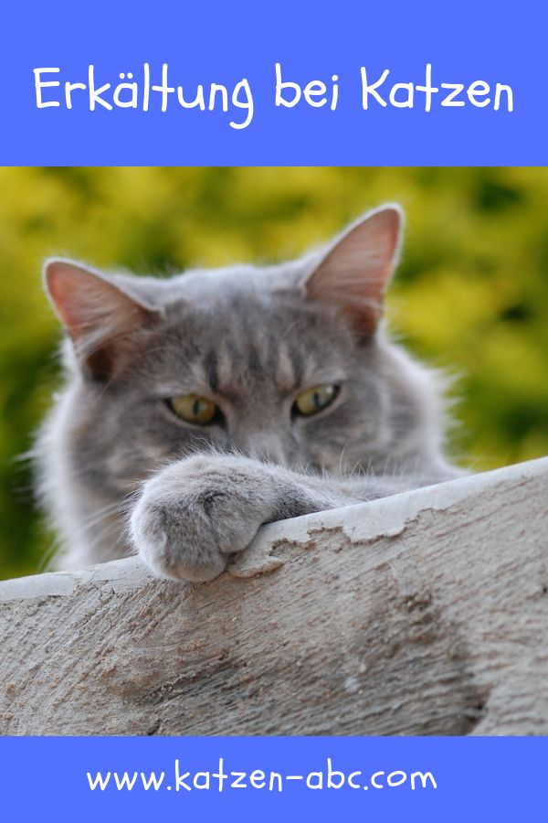 Pin Auf Gesundheit Pflege Fur Katzen