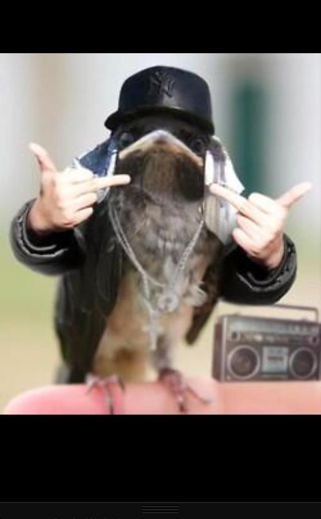 60 best Animal edits images on Pinterest | Funny animals ... |Hilarious Animal Edits