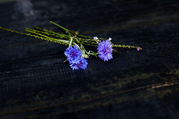 Blå kornblomst. Foto: Mathilda Yokelin