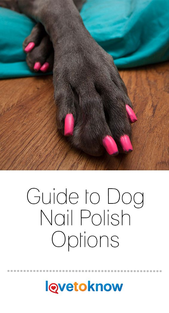 Guide To Dog Nail Polish Options Lovetoknow Dog Nails Dog Grooming Diy Fancy Dog