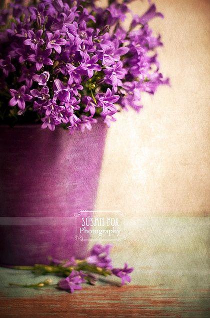 Violeta para o jardim