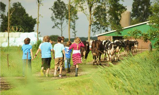 FarmCamps De Geele Bosch De koeien uit de wei halen